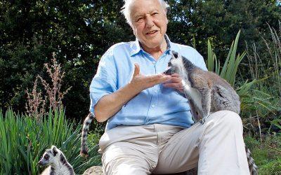 4+1 érdekesség David Attenboroughról